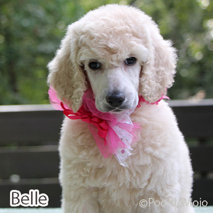 Meet Belle, daughter of Bianca & Bently. A puppy bought the RIGHT way!